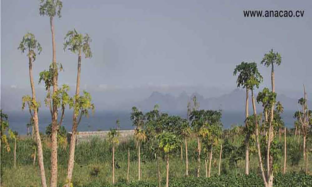 Porto Novo: 300 produtores agrícolas começam em Abril a tratar seus produtos para o mercado turístico