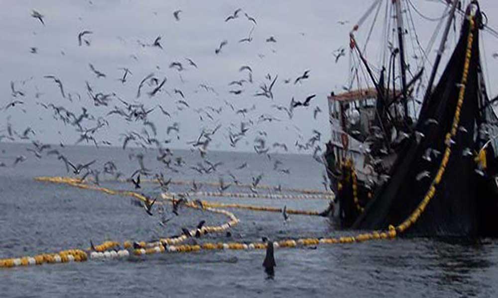 Navio Esperanza da Greenpeace em Cabo Verde em campanha pela pesca sustentável