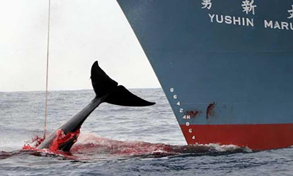 Cabo Verde quer maior presença da Greenpeace para monitorizar mar e pescas