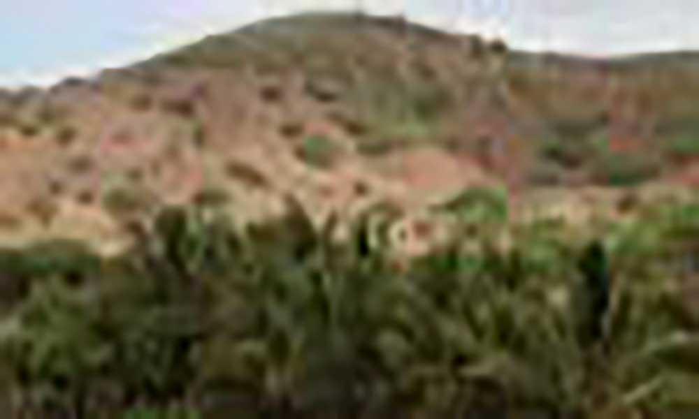"""Maio: Garantia de um ano agrícola """"razoável"""" está a depender de pelo menos mais uma chuva – agricultores"""