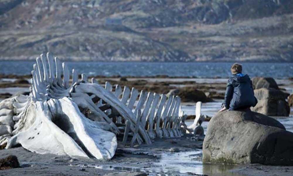 Liberdade de Expressão: Leviathan, o filme russo que está a incomodar o Kremlin