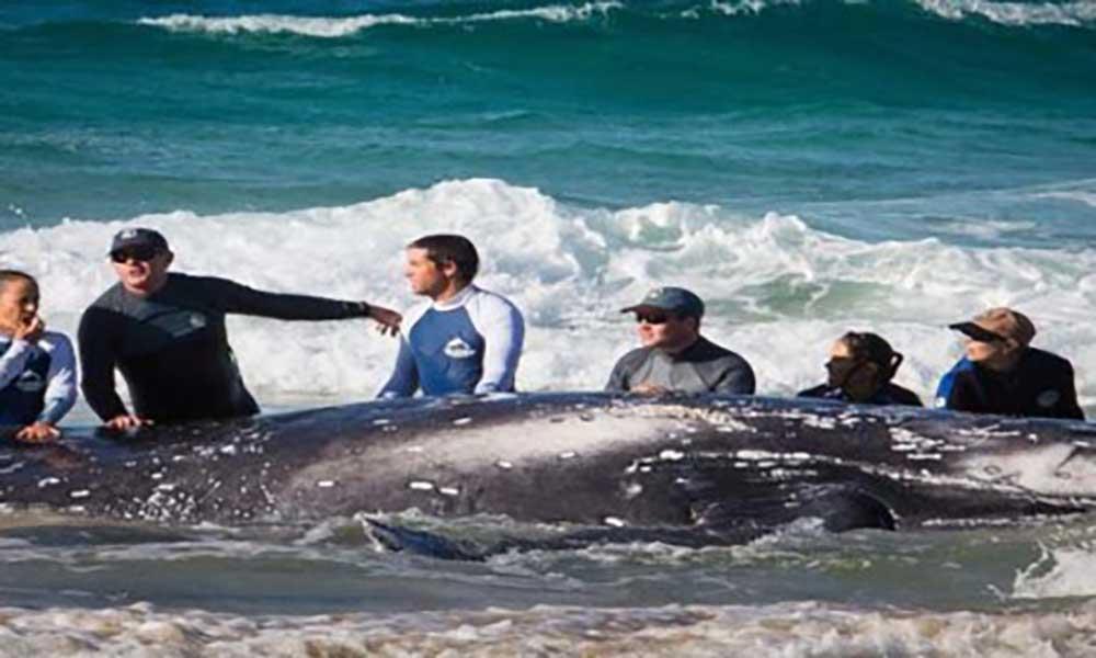Santuário de baleias rejeitado por países da África Ocidental e Japão