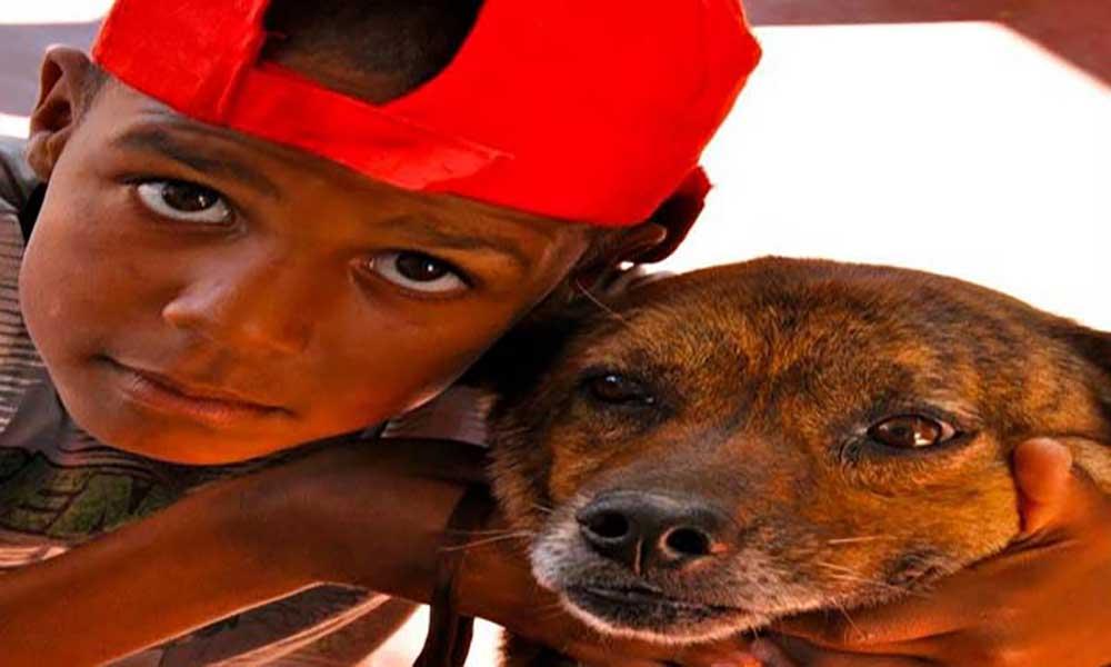 Sal: OSPA faz espectáculo para cães