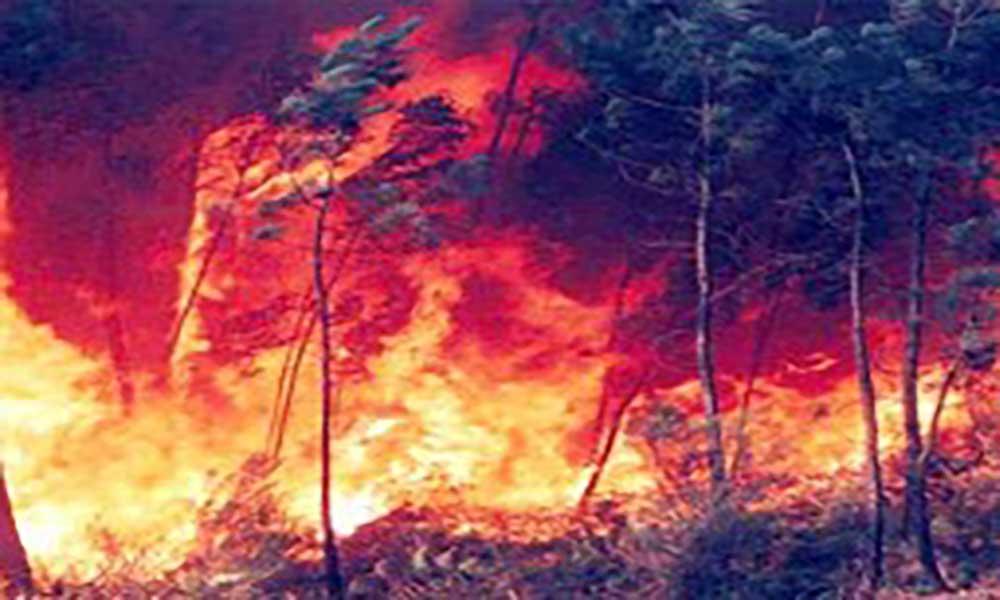 Incêndios em Portugal: Cáritas dá 150 mil euros para