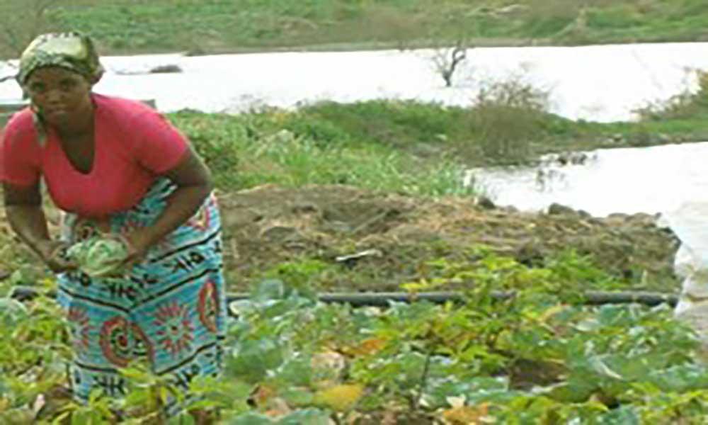 Cabo Verde pode estar a lidar com uma nova praga na agricultura