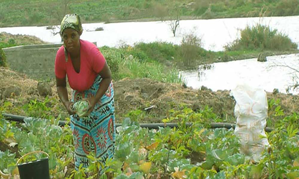 Ano agrícola: Governo acredita num bom ano mas prepara-se para o pior – ministra