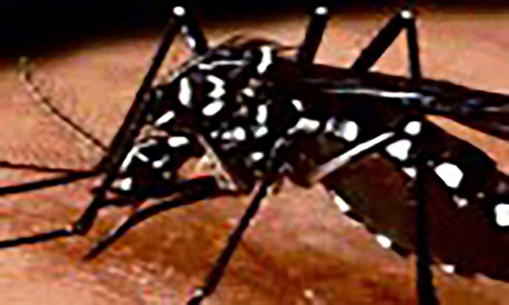 Autoridades sanitárias lançam campanha Nacional contra as doenças transmitidas por mosquitos