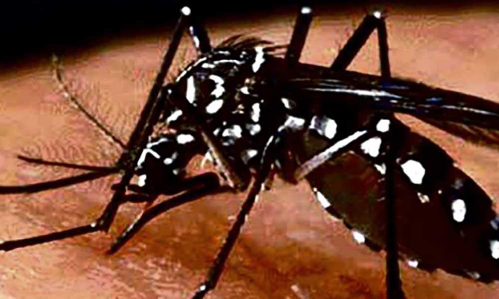 Angola pediu apoio ao Brasil para combater vírus Zika