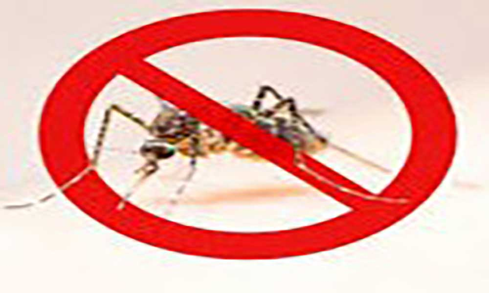 stop paludismo