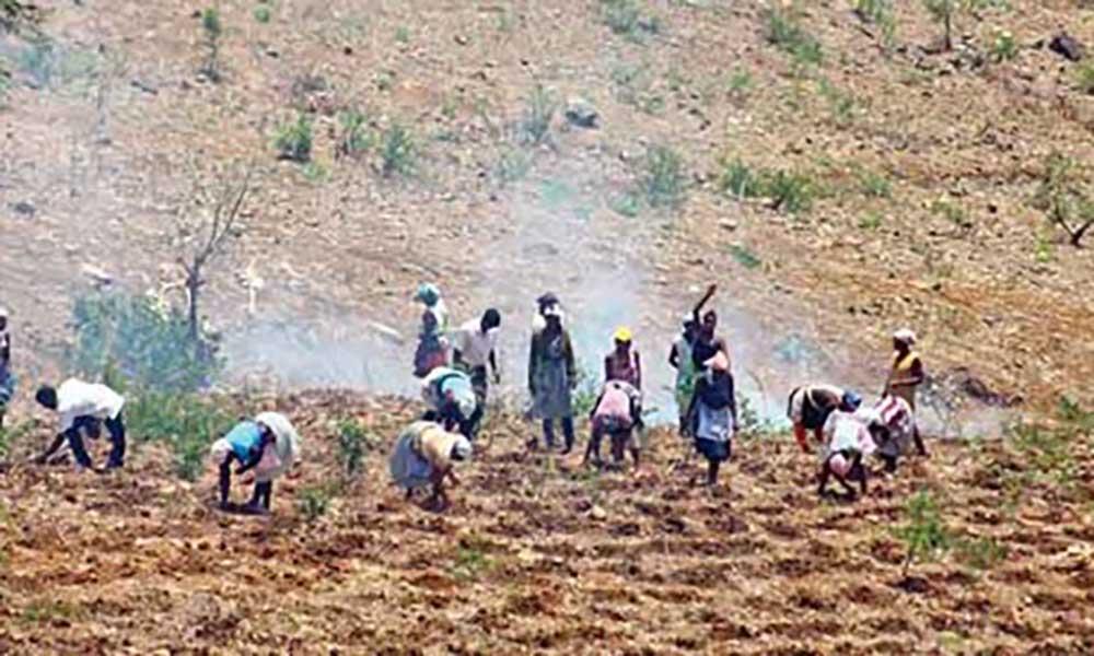 Sementes para 10.500 agricultores mais vulneráveis por causa da seca