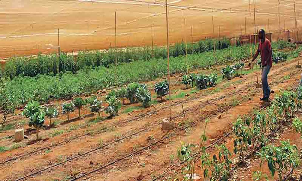 Campo da Serra revoluciona agricultura e pecuária na Boa Vista