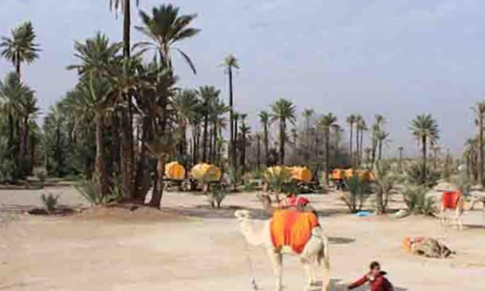 Ambiente: Jornalistas africanos debatem Alterações Climáticas em Marrocos