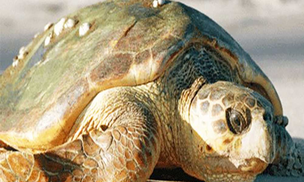 Equipa doGEFvisita Boa Vista para se inteirar de projectos com tartarugas