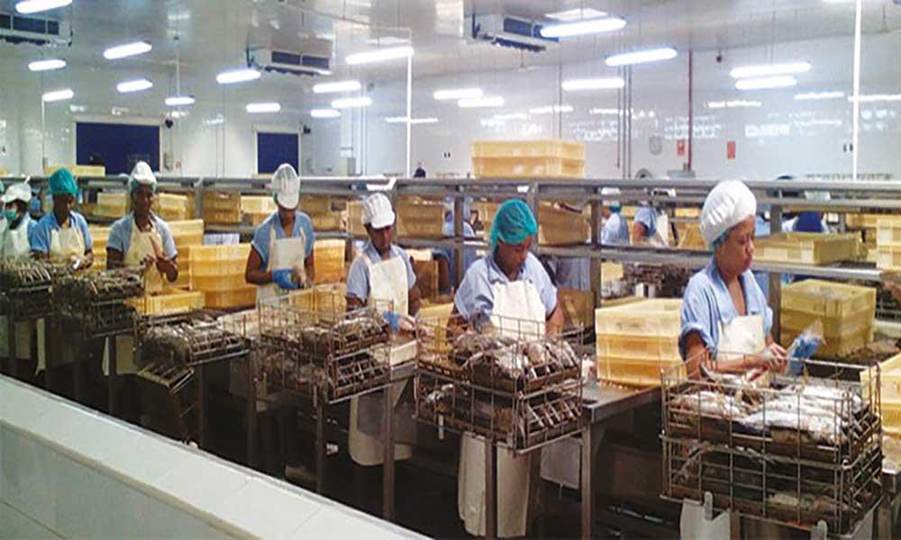 Sector das pescas: UE aprova isenção de taxas aduaneiras às empresas de exportação