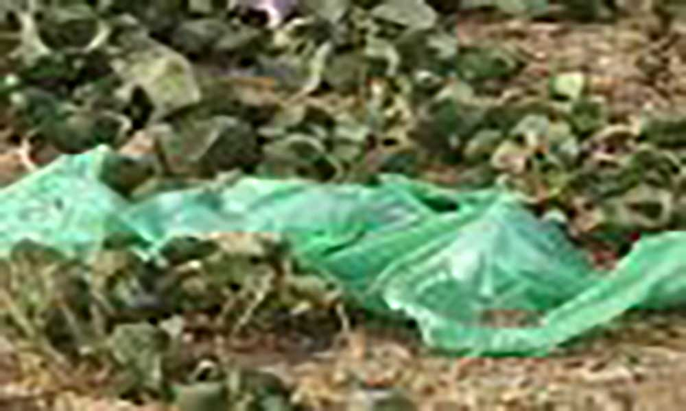 Praia: Encontrado feto na ribeira do Paiol