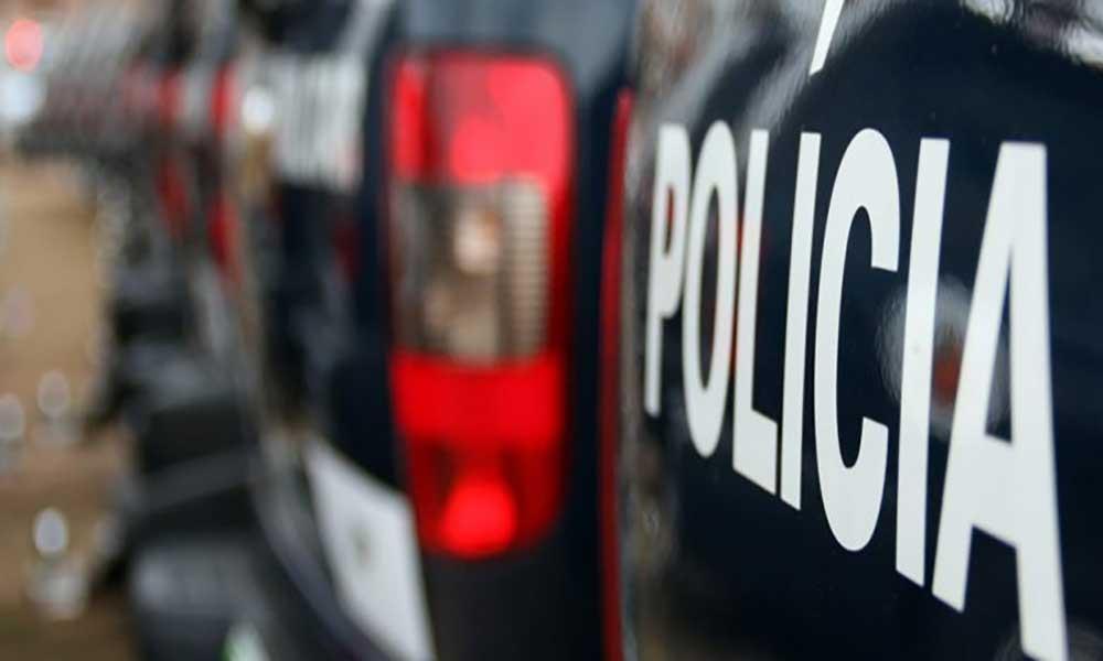 Sal: Polícia desmantela rede que roubava animais na Terra Boa
