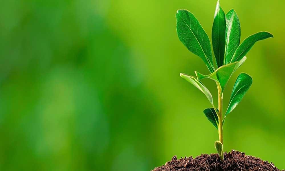 Plantação de árvores marcam comemoração do Dia da Água em São Nicolau