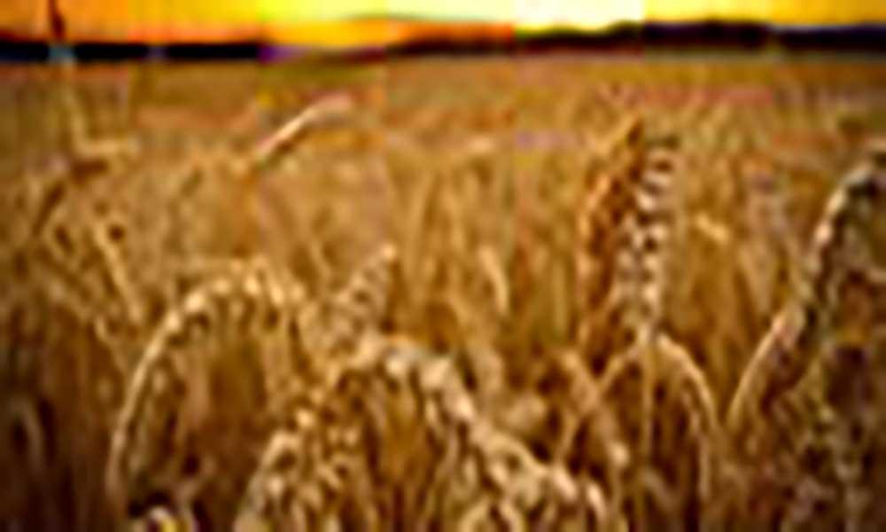 Moçambique prevê produzir 3,3 milhões de toneladas de cereais