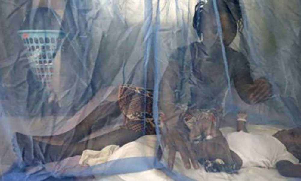 Cientista portuguesa faz avanços na cura para a malária