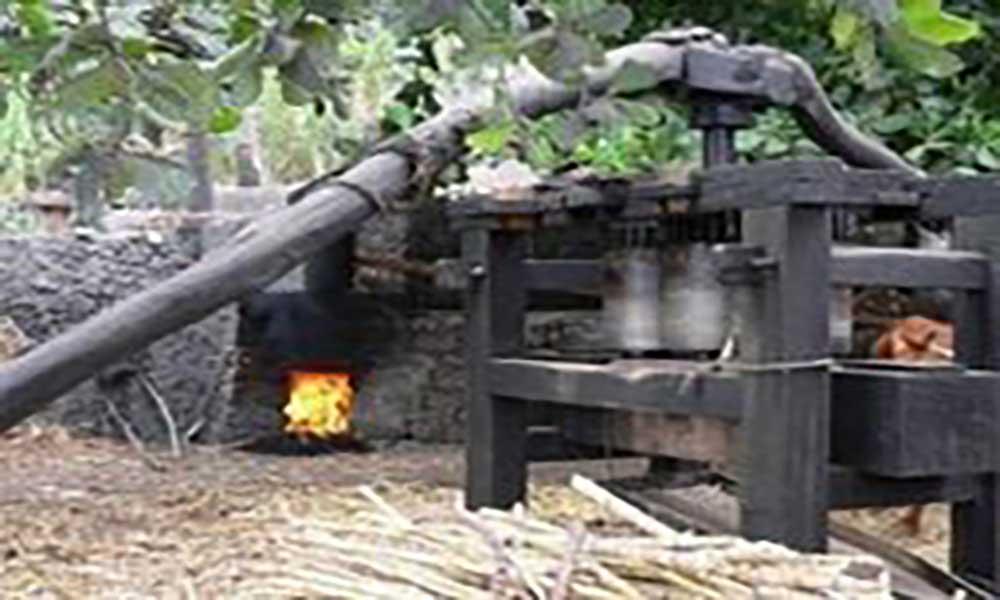 IGAE capacita produtores e fiscais em matéria de preparação e comercialização do grogue em S. Antão