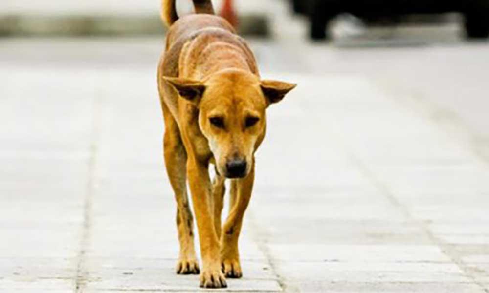 Maio: Câmara sensibiliza população para combate a animais na via pública