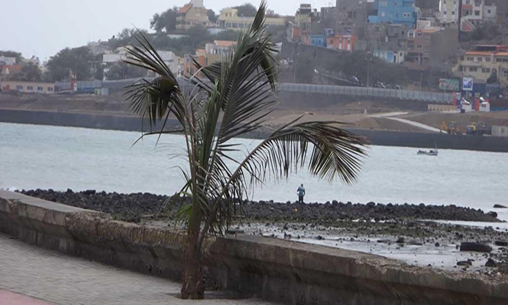 Câmara da Praia apela aos munícipes para evitarem retirar plantas dos espaços verdes da cidade