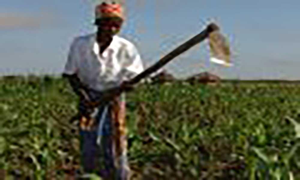 Azágua.Agricultores fazem sementeira com olhos em novas pragas