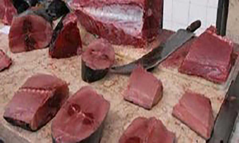 São Nicolau: Festival de atum a 12 de agosto