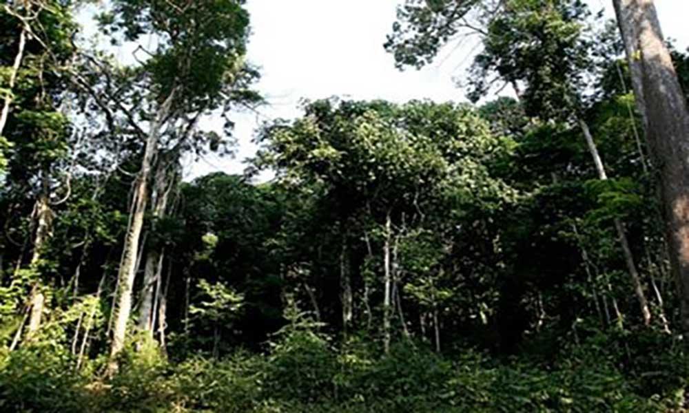 """UE e Cabo Verde assinam protocolo de """"Reforço das Capacidades e Resiliência do Setor Florestal"""""""