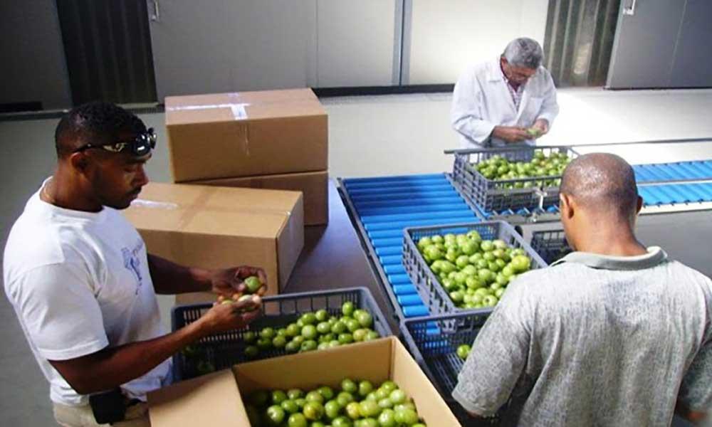 Santo Antão: Produtores agrícolas pedem aumento das viagens marítimas para ilhas turísticas para aumentar exportação
