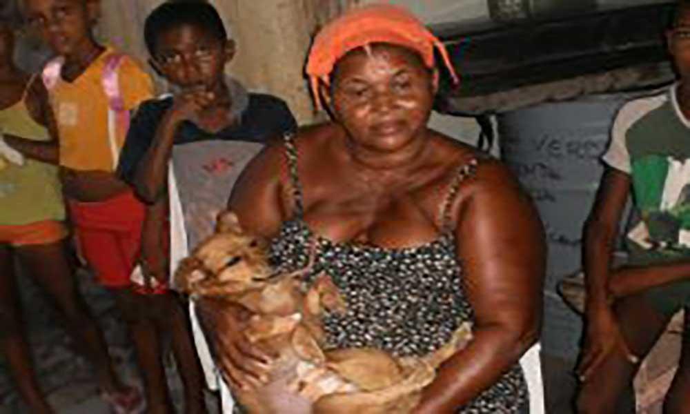 São Vicente: Sima Bô chega a marca de 10 mil cães esterilizados