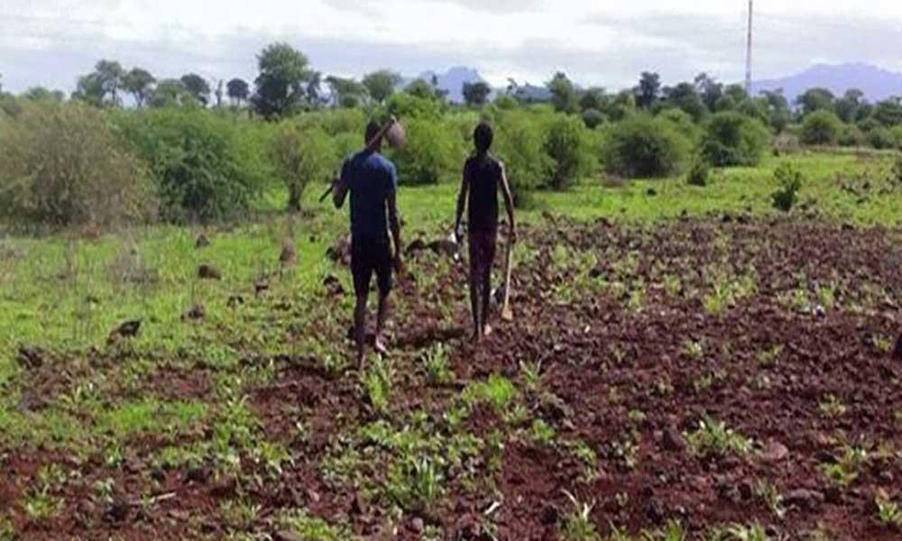 Praia: Agricultores de Fonton preocupados com praga que está a devastar as plantações
