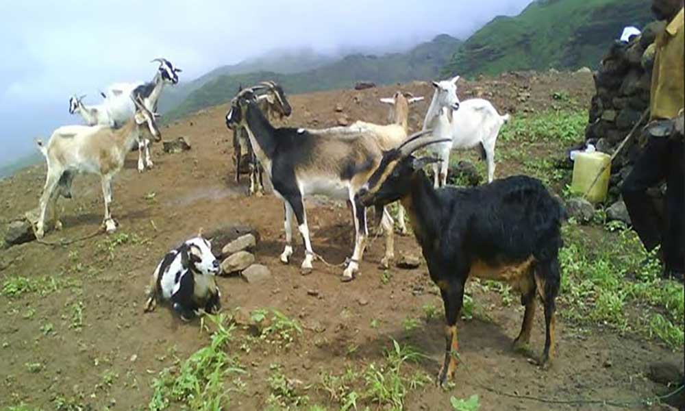 Criadores de gado do Planalto Norte beneficiam de projecto de abastecimento de água