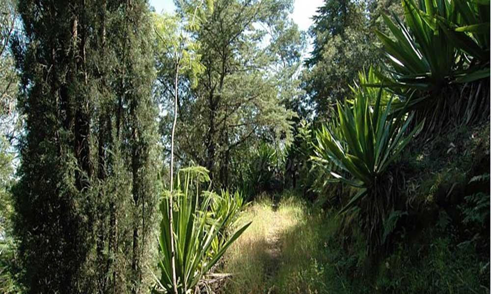 São Filipe: Monte Velha recuperada com 14 mil plantas endémicas