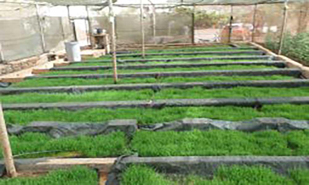 São Vicente: UCID sugere a forragem como solução no combate à seca