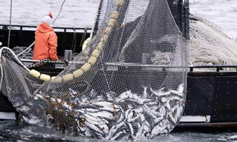 Portugal: Pesca da sardinha proibida até final de Abril