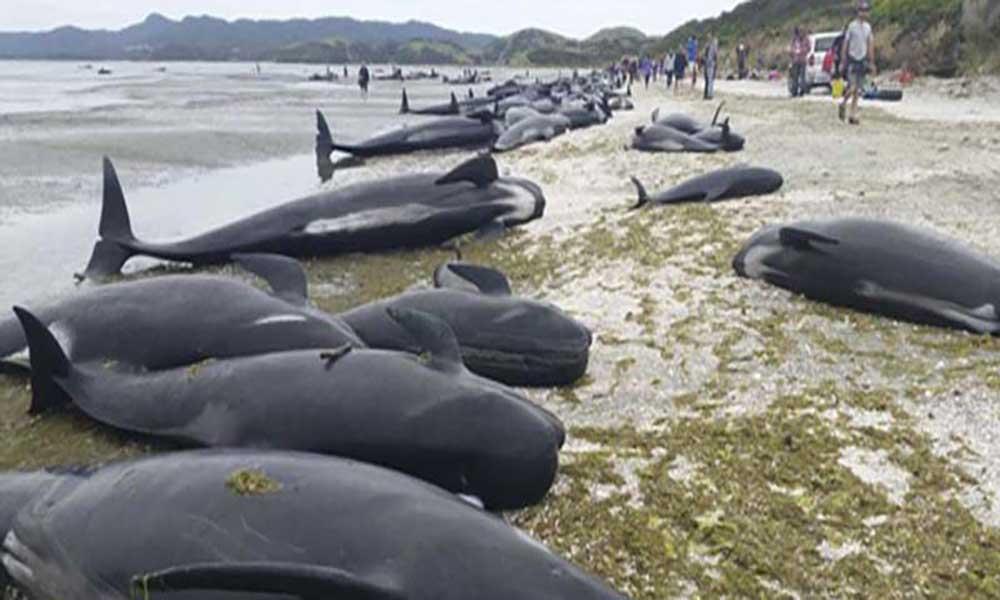 Mais de 20 baleias-piloto morrem ao dar à costa na ilha do Maio