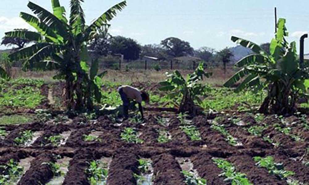 Moçambique: Governo negoceia 64,9 milhões com Banco Mundial