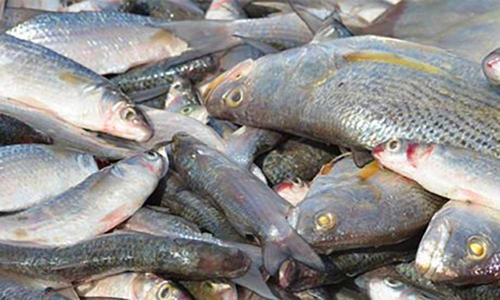 Guiné-Bissau regressa às negociações de pesca com UE