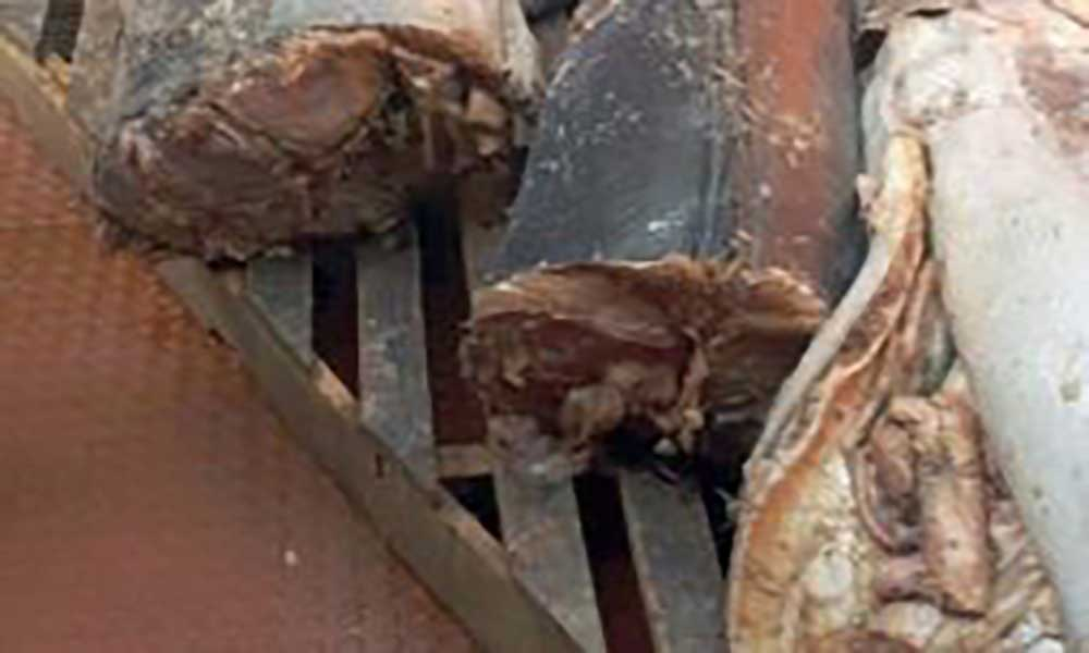 Apreendido Blue Marlin à venda ilegalmente no Pelourinho do Mindelo proveniente de barco espanhol