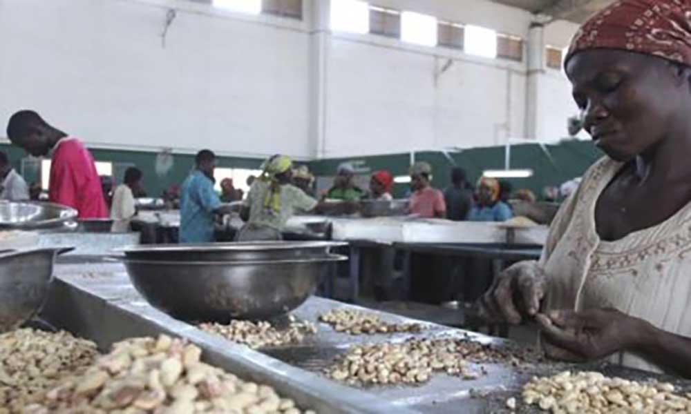 Quebra no negócio do caju desacelera crescimento económico na Guiné-Bissau