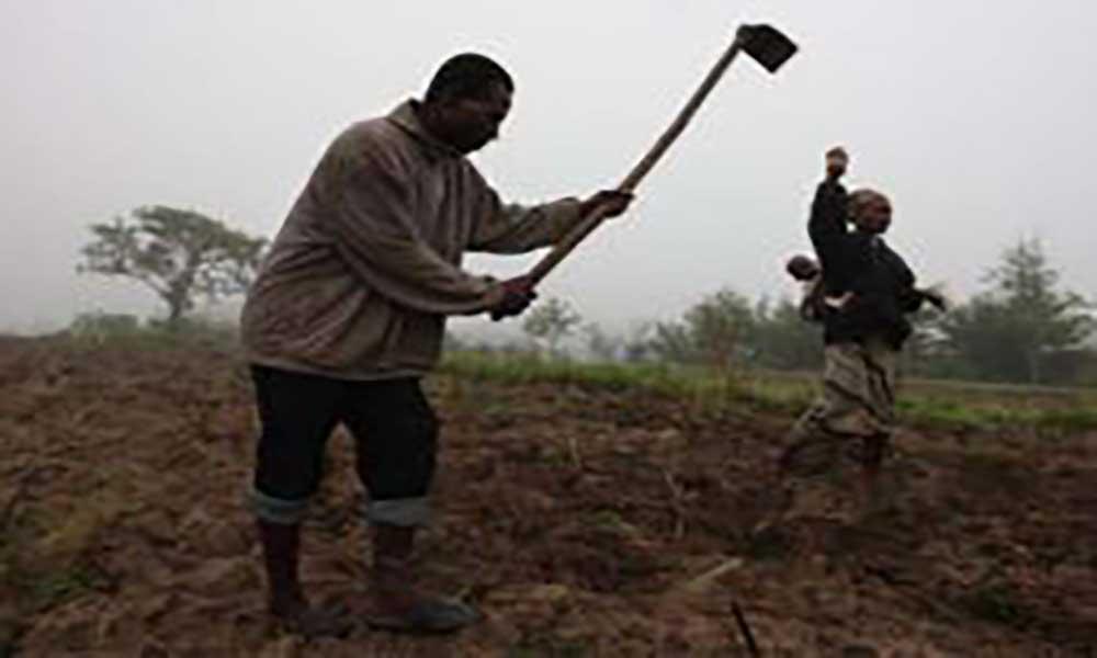 Moçambique com seguro para proteger agricultura