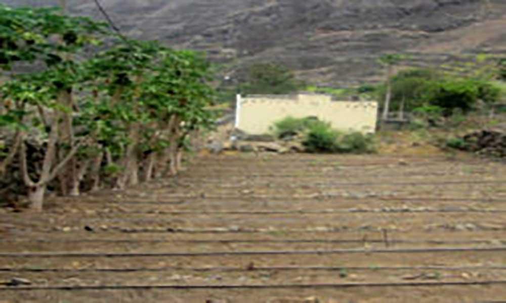 Porto Novo/Manuel Lopes: Agricultores tentam reerguer-se depois de oito mil contos de prejuízos