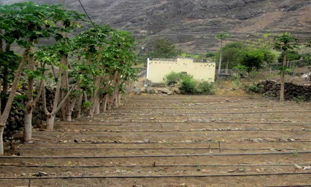 "Porto Novo: Agricultores esperam apoio do Governo para compensar ""avultados prejuízos"""