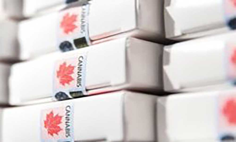 Canadá: País com falta de maconha após legalização
