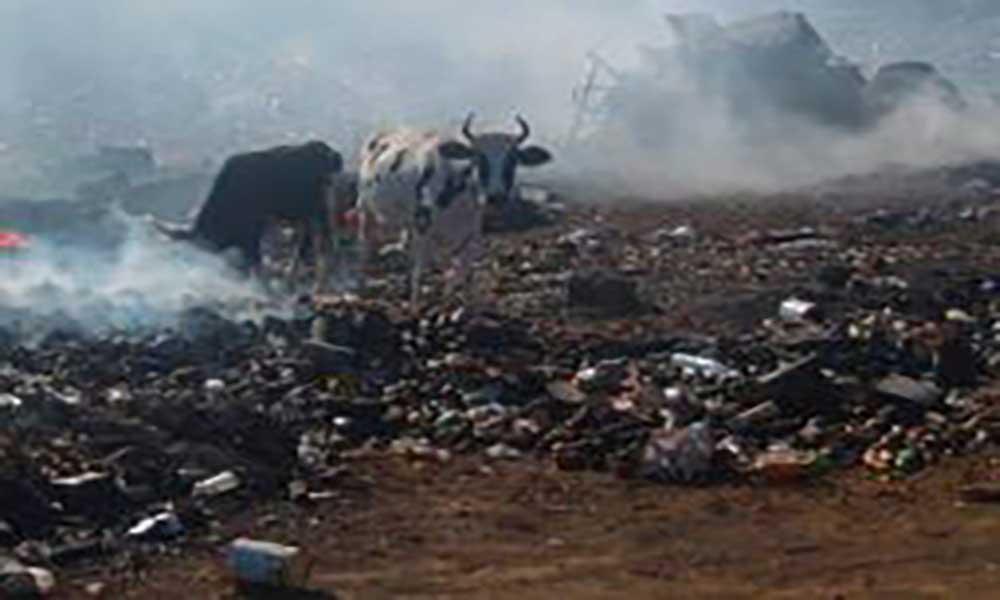 Santo Antão: Criadores de gado exigem vedação da lixeira intermunicipal para evitar invasão de animais